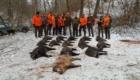 wildboar driven hunt