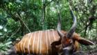 chasse en foret equatoriale