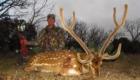 axis deer Texas