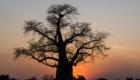 safari photo Botswana