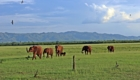 Elephant safari photo