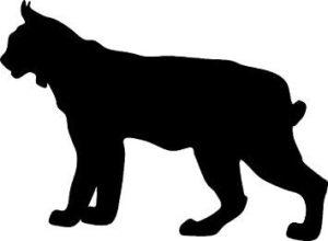 chasse au lynx