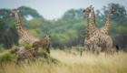 Botswana safari photo